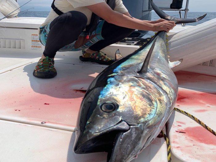 2019.7.20 青森小泊港でクロマグロを釣る(キャスティングゲーム)