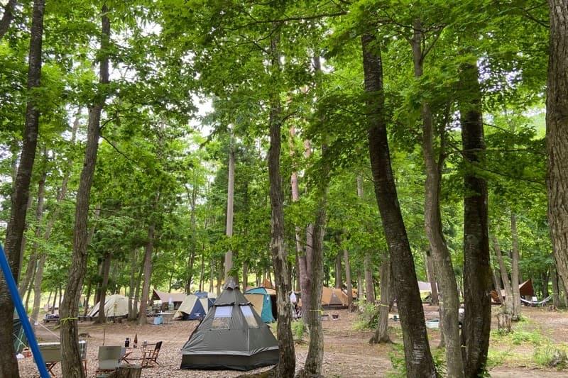 秋田県とことん山キャンプ場:林間サイト